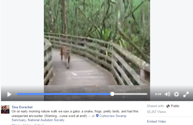 Woman comes face-to-face with panther on trail