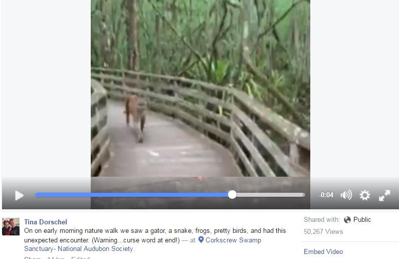 Caught on camera: Woman encounters Florida panther at Corkscrew Swamp Sanctuary