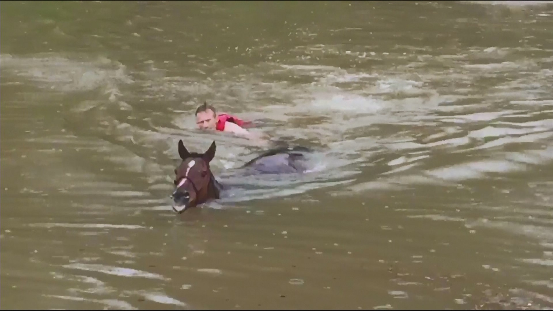 Rescuers Help Save Drowning Horses On Cypresswood Khou Com