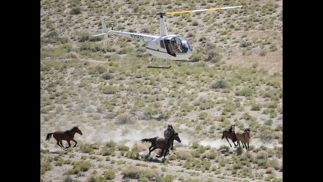 Kill or sell wild horses, panel tells feds | khou.com