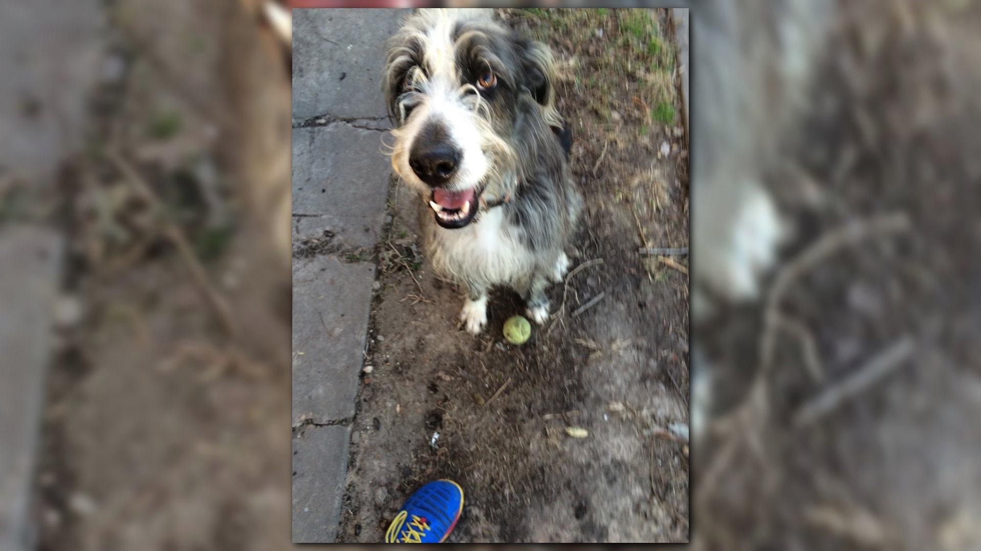 surveillance video catches moment firefighter u0027s dog shot killed