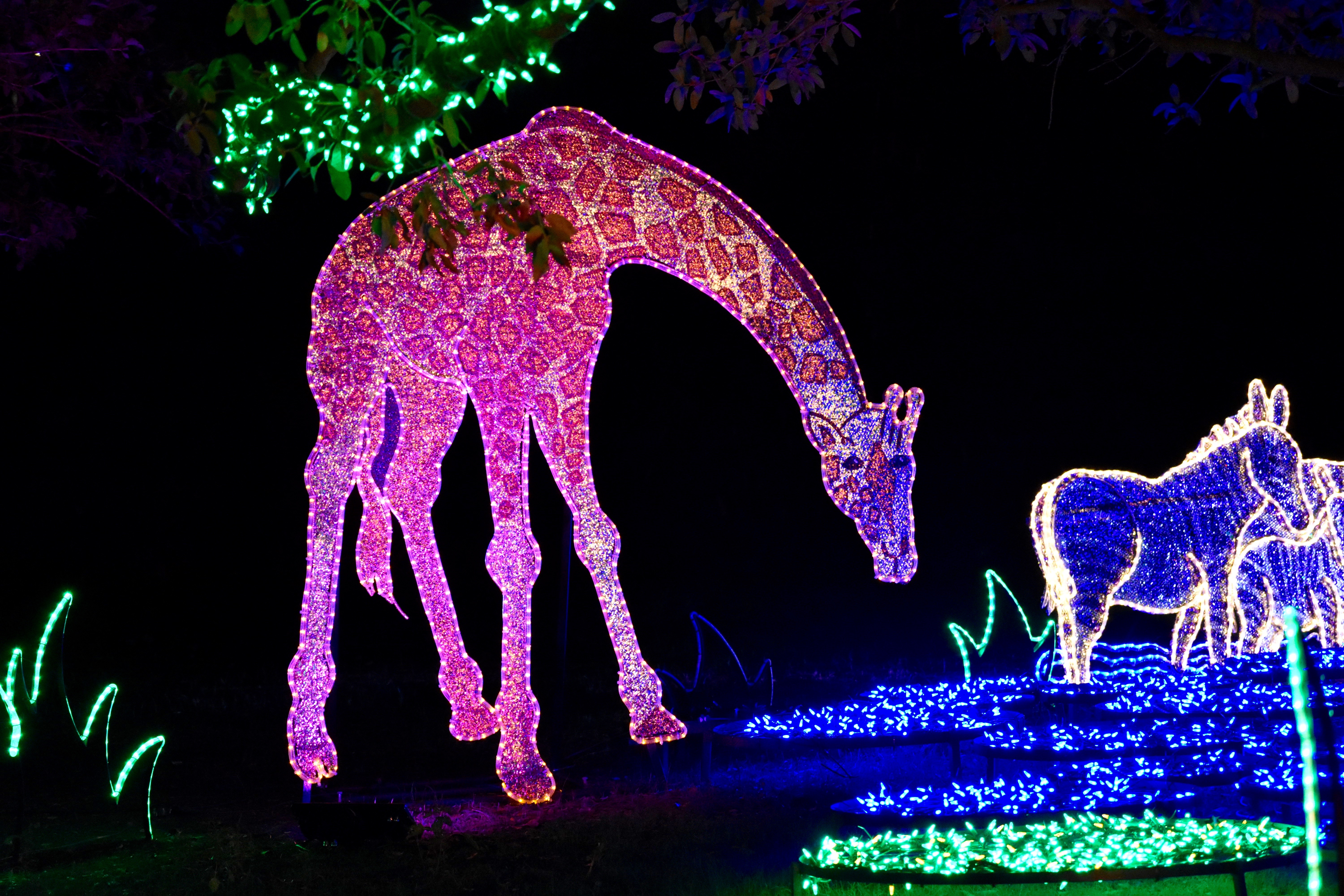s Houston Zoo lights up for the holiday season